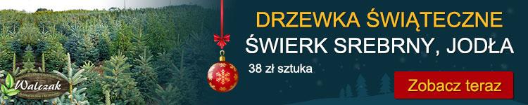Świerki Kraków